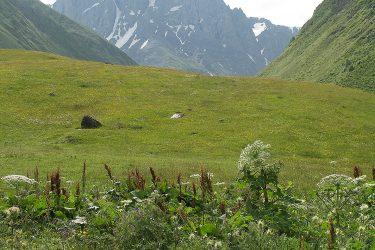 Wandelreis Georgië De Kaukasus | Snow Leopard (4)