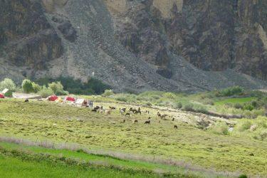 Wandelreis Changtang Pangong Tso Nubra Ladakh India | Snow Leopard (13)