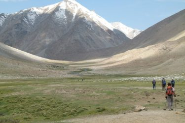Wandelreis Changtang Pangong Tso Nubra Ladakh India | Snow Leopard (22)
