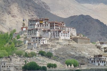 Wandelreis Changtang Pangong Tso Nubra Ladakh India | Snow Leopard (04)