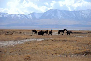Aktieve reis Issy Kul Hemelse Bergen Bishkek Kirgizië of beklim Peak Lenin   Snow Leopard 12