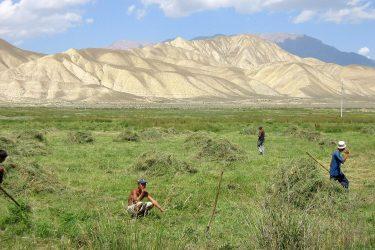 Aktieve reis Issy Kul Hemelse Bergen Bishkek Kirgizië of beklim Peak Lenin   Snow Leopard 14