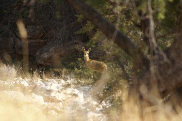 Wandelreis Namibië Etosha Windhoek woestijn sossusvlei | Snow Leopard 12