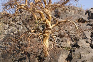 Wandelreis Namibië Etosha Windhoek woestijn sossusvlei | Snow Leopard 19