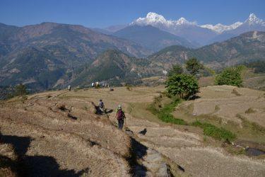 Panchase Danda Poon Hill trektocht Annapurna, Nepal   Snow Leopard(19)