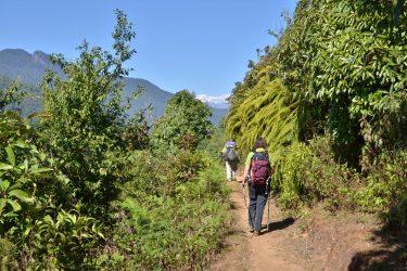 Panchase Danda Poon Hill trektocht Annapurna, Nepal   Snow Leopard(8)