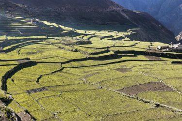 Trektocht Phu en Nar Annapurna Nepal | Snow Leopard (38)