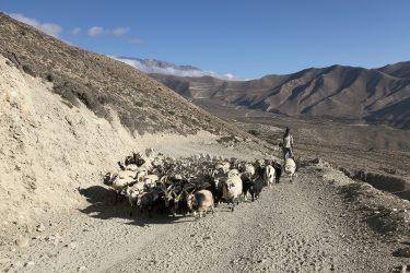 Trektocht alpiene beklimming expeditie - nepal - mustang - saribung (10)