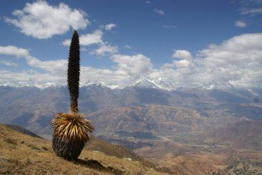 Trektocht Cordillera Blanca Alpamayo Peru | Snow Leopard (04)
