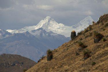 Trektocht Cordillera Blanca Alpamayo Peru | Snow Leopard (06)