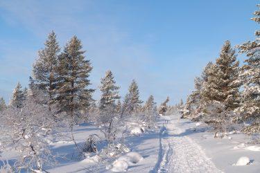Sneeuwschoenwandelen reis Lapland Poolcircel Finland | Snow Leopard (03)