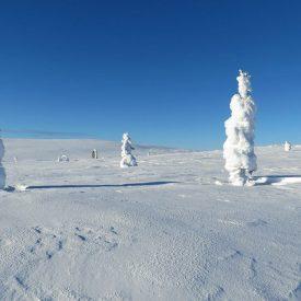 Sneeuwschoenwandelen reis Lapland Poolcircel Finland | Snow Leopard (07)