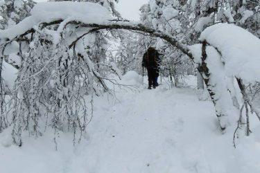 Sneeuwschoenwandelen reis Lapland Poolcircel Finland | Snow Leopard (09)