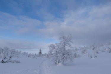 Sneeuwschoenwandelen reis Lapland Poolcircel Finland | Snow Leopard (11)