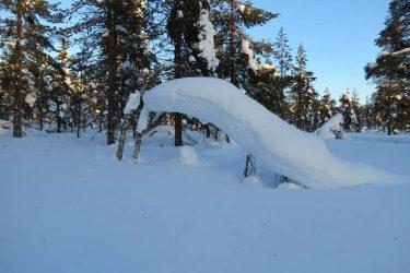 Sneeuwschoenwandelen reis Lapland Poolcircel Finland | Snow Leopard (12)
