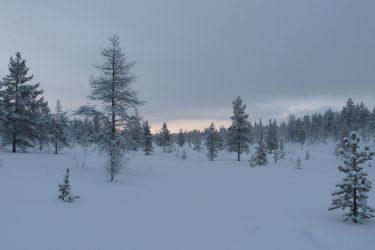 Sneeuwschoenwandelen reis Lapland Poolcircel Finland | Snow Leopard (19)