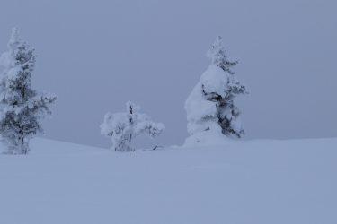 Sneeuwschoenwandelen reis Lapland Poolcircel Finland | Snow Leopard (24)