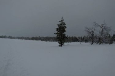Sneeuwschoenwandelen reis Lapland Poolcircel Finland | Snow Leopard (26)