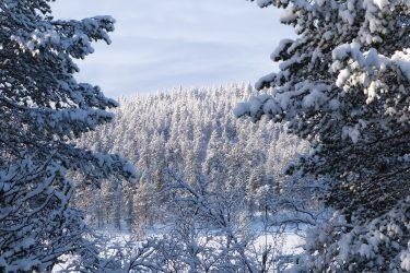 Sneeuwschoenwandelen reis Lapland Poolcircel Finland | Snow Leopard (28)
