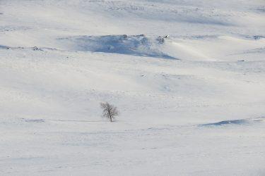 Sneeuwschoenwandelen reis Treriksrøysa Noorwegen | Snow Leopard (47)