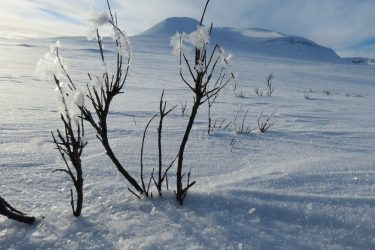 Sneeuwschoenwandelen reis Treriksrøysa Noorwegen | Snow Leopard (78)