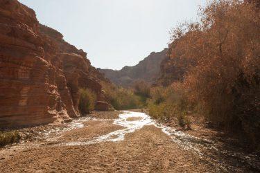 Wandelreis Jordanië Woestijn Petra Wadi Rum | Snow Leopard (01)