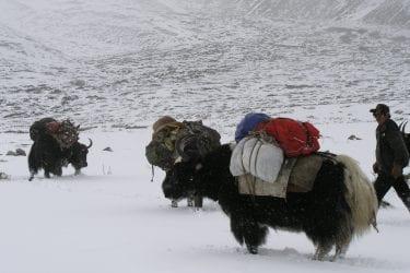 Trektocht Mt Everest Kangshung Lhasa Rongbuk Tibet | Snow Leopard 24
