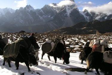 Trektocht Mt Everest Kangshung Lhasa Rongbuk Tibet | Snow Leopard 55