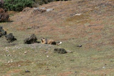 Trektocht Upper Dolpo Inner Mu La Dunai Do Nepal | Snow Leopard (21)
