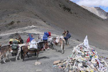 Trektocht Upper Dolpo Inner Mu La Dunai Do Nepal | Snow Leopard (28)