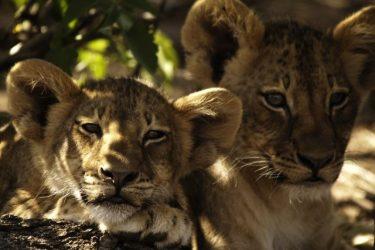 ZaZoe Xperience 4x4 kampeerreis Zuid-Afrika Avontuur | Snow Leopard (24)