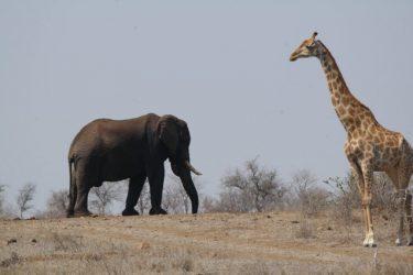 ZaZoe Xperience 4x4 kampeerreis Zuid-Afrika Avontuur | Snow Leopard (91)