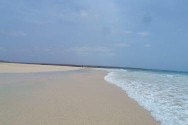 Kaapverdië 3 eilanden Santiago Fogo Boa Vista | Snow Leopard (01)