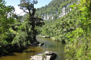 55 Rainforest Pororari River - NZ Nieuw-Zeeland - indiv autorondreis   Snow Leopard
