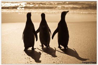 71 Dunedin Penguin Place (2) - NZ Nieuw-Zeeland - indiv autorondreis   Snow Leopard