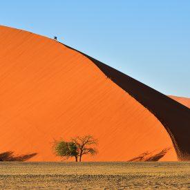 Namibie zand duinen sand dunes Snow Leopard (1)