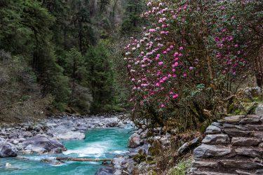 Nepal - Langtang - trektocht - Snow Leopard (14)