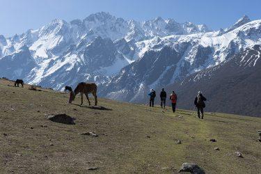 Nepal - Langtang - trektocht - Snow Leopard (15)