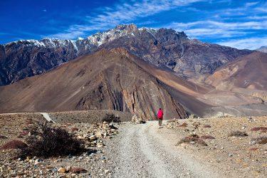 Nepal - Rond Annapurna - trektocht - Snow Leopard (4)