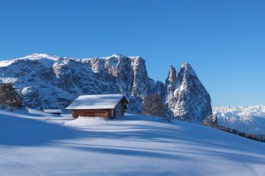 Sneeuwhaas - Italie - Dolomieten - sneeuwschoenwandelen reis (4) snow leopard