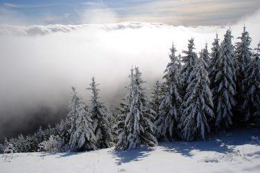 Sneeuwhaas - Oostenrijk - Jura - sneeuwschoenwandelen reis - snow leopard