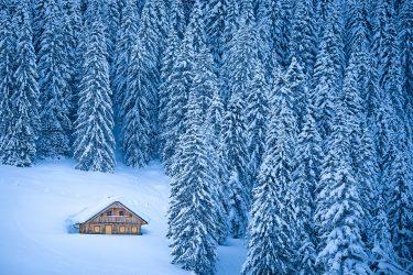 Sneeuwhaas - Oostenrijk - Salzkammergut - sneeuwschoenwandelen reis (3) snow leopard