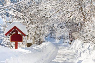 Sneeuwhaas - Oostenrijk - Tirol - sneeuwschoenwandelen reis (3) snow leopard