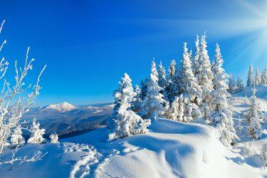 Sneeuwhaas - Oostenrijk - Tirol - sneeuwschoenwandelen reis (4) snow leopard