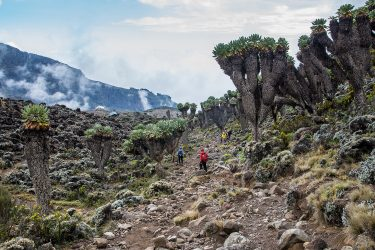 Tanzania - beklimming Kilimanjaro - trektocht Uhuru Peak 5895m Machame Northern Circuit - Snow Leopard (1)