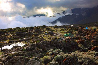 Tanzania - beklimming Kilimanjaro - trektocht Uhuru Peak 5895m Machame Northern Circuit - Snow Leopard (6)